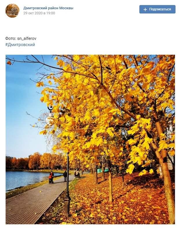 Фото дня: золотая осень в Дмитровском