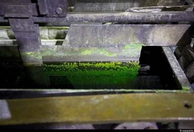 Анодный шлам серебряного электролиза скапливается в мешках, в которых установлены аноды. Этот осадок содержит золото,...