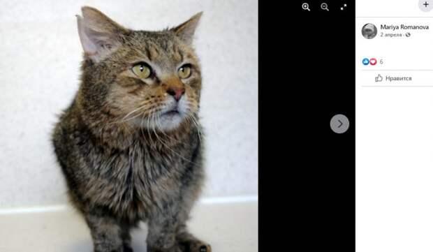 Хмурый кот из Левобережного нашел дом