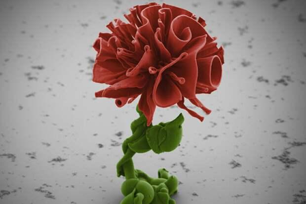 Миниатюрней некуда: как ученый из Гарварда выращивает наноцветы
