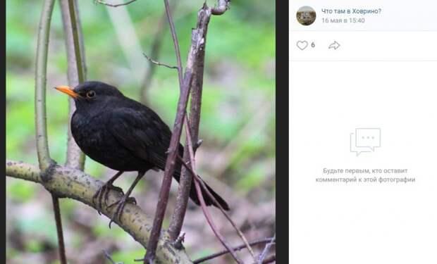 Фото дня: «звезда» Химкинского лесопарка попала в объектив фотоохотника