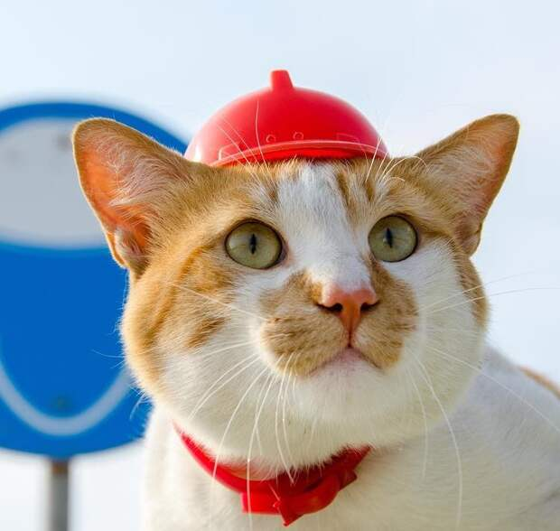 Кот Мостик теперь в Telegram