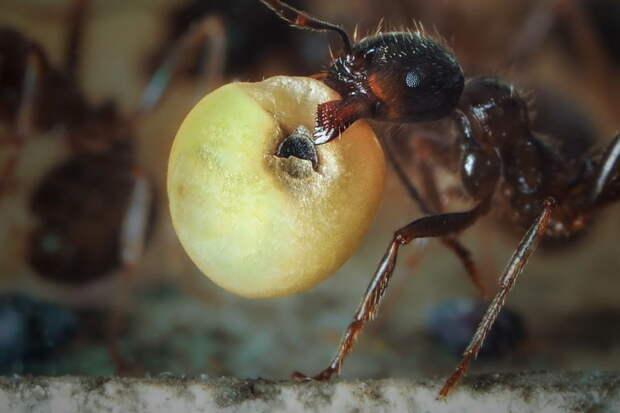 Как избавиться от муравьев на дачном участке?