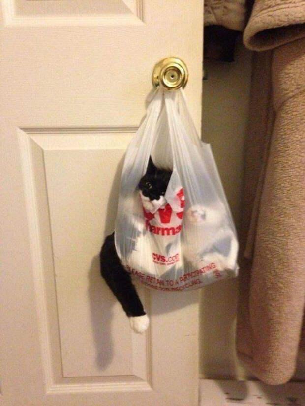 Котейки,  которым удобно везде