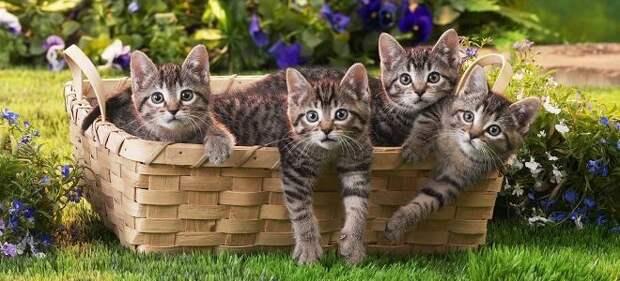 Почему женщинам снятся коты?