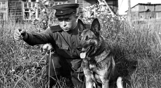 Собака Джульбарс - герой войны