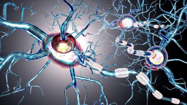 Томские ученые внедрят в клинику новый метод МРТ мозга