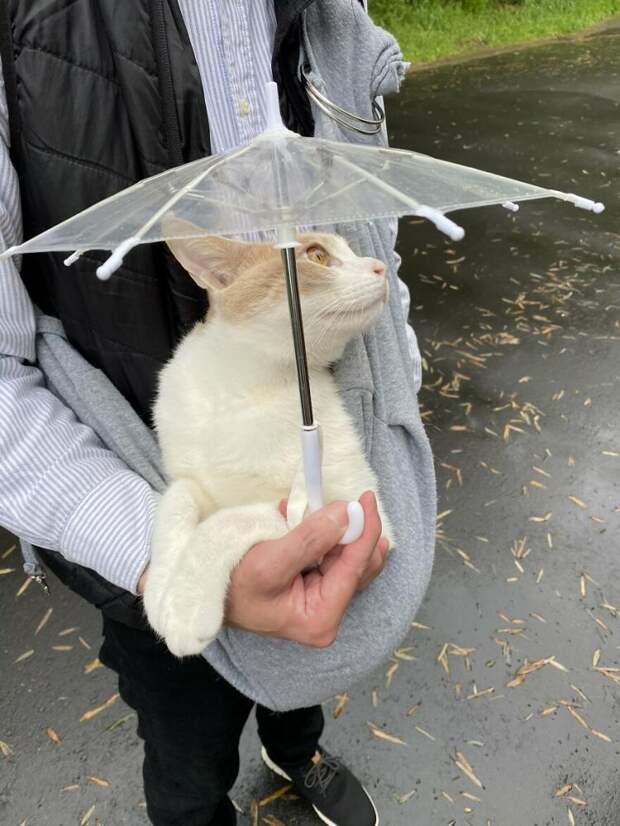 Японский котик обожает гулять в дождь, потому что у него есть свой зонтик