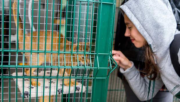 Сеть зоомагазинов передала корм для больных животных из центра «Юна» в Подольске