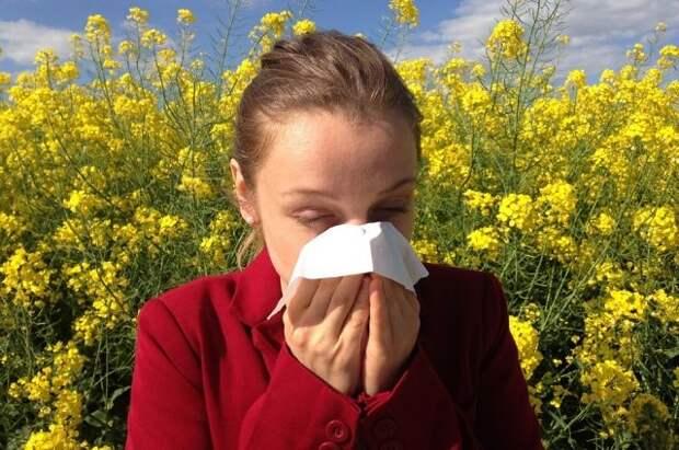 Что такое сенная лихорадка и как ее распознать