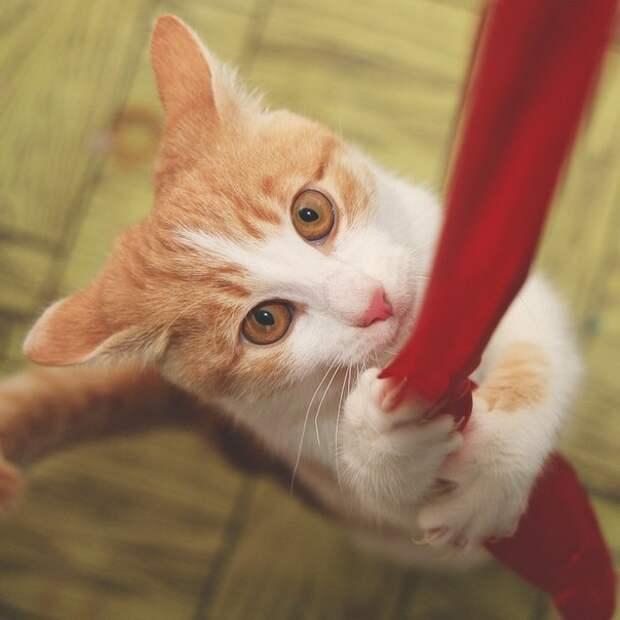 Худенького котенка чудом спасли от неадекватной пожилой женщины