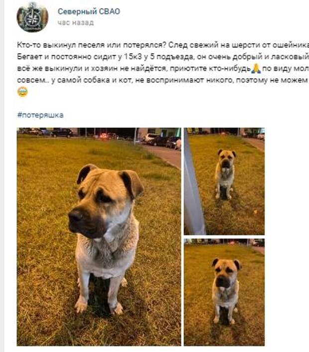 Потерявшийся пёс ждёт своего хозяина возле подъезда новостройки на Долгопрудной