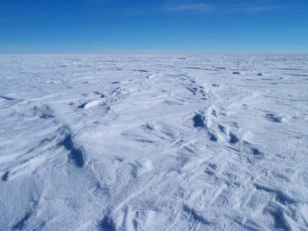 В антарктических льдах нашли останки организма, ранее неизвестного науке