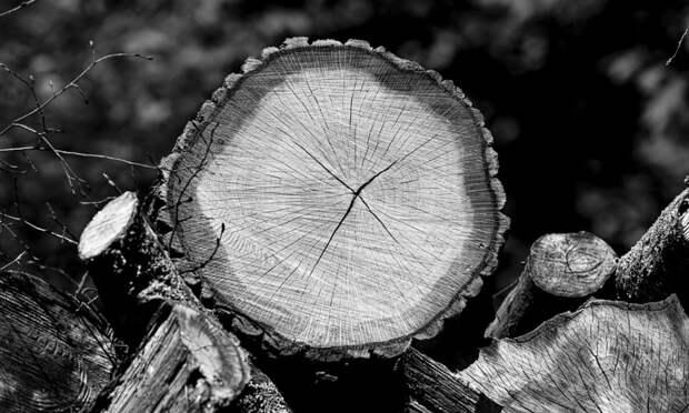 Уголовное дело возбудили после массовой вырубки деревьев в Крыму