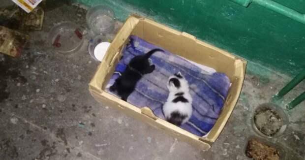 Котят подбросили в подъезд! Двухнедельные крохи остались совсем одни…