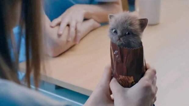 Котята и шоколадный бисквит: самая милая реклама в мире