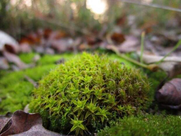 мох макрос