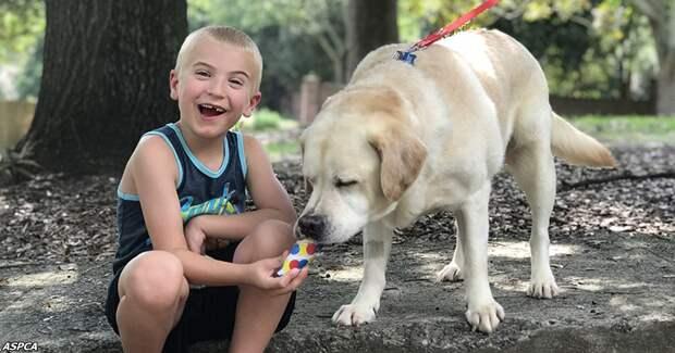 7-летнего мальчика признали «ребёнком года»: он спас 1300 собак
