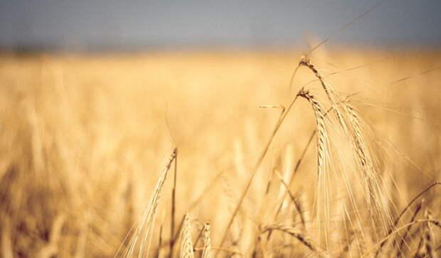 23 агрария изОренбуржья выиграли конкурс наполучение гранта