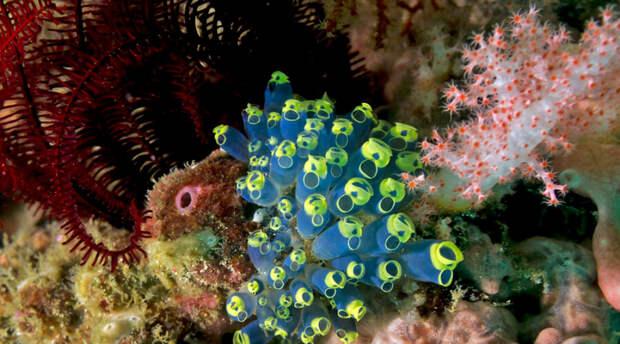 Биологи обнаружили поразитильную способность к регенерации у животного