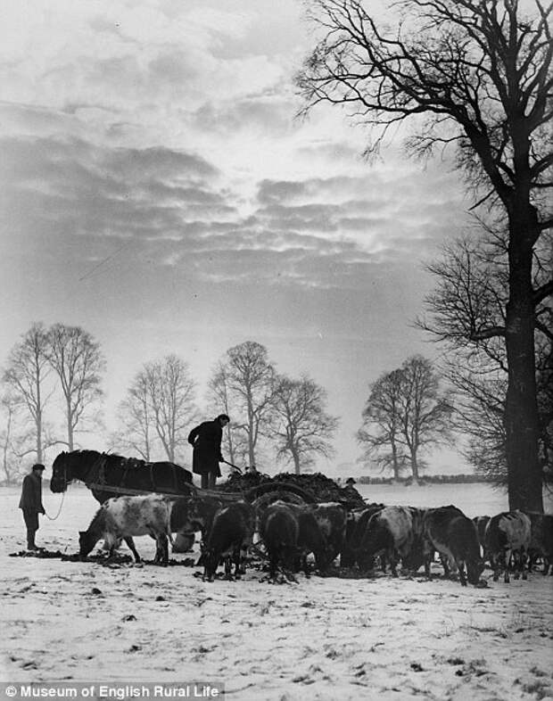Сельская Англия