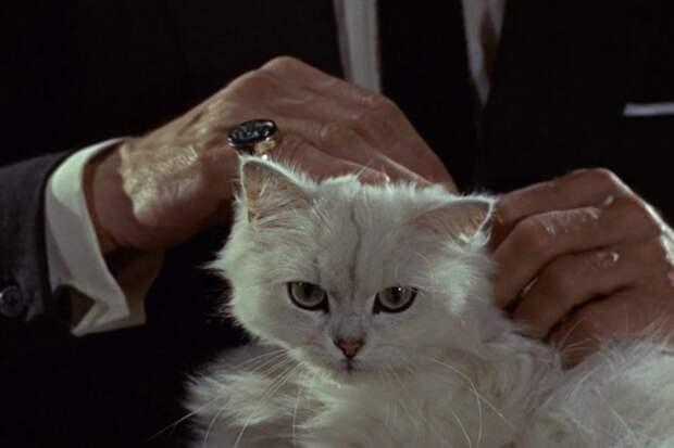 13 лучших котиков из фильмов и сериалов