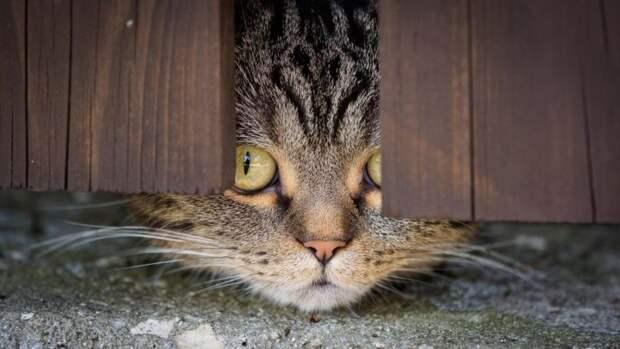 Вот так красочно выглядит кошачье любопытство!!!