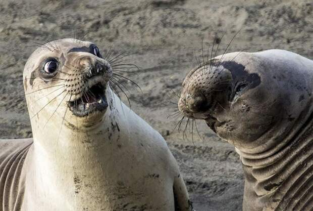 Смешные животные.