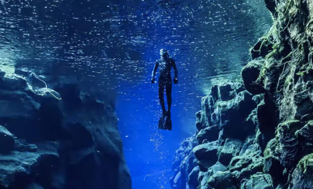 Существа из «мертвой зоны» океана