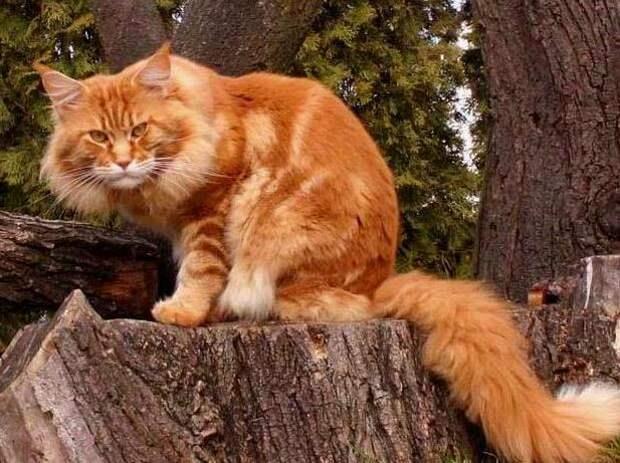 Кошки из буша
