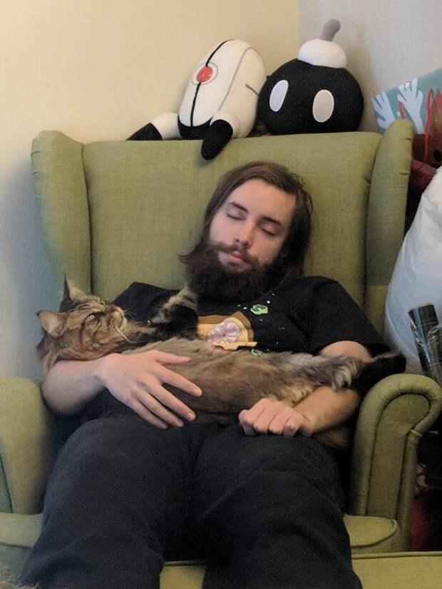 Парни на отдыхе домашние животные, животные, забавно, кошки, мило, мэйкуны, очаровательно, смешно