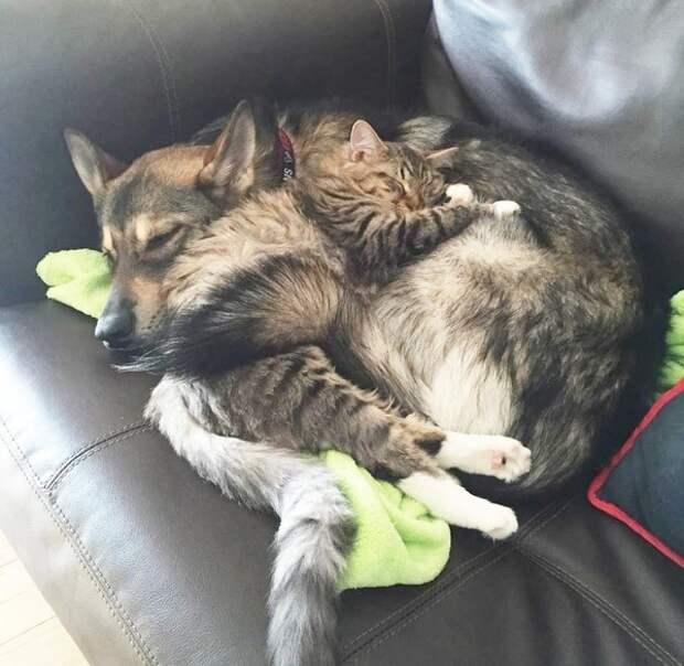 Как собака выбрала кота из приюта вместо хозяйки и об их многолетней дружбе