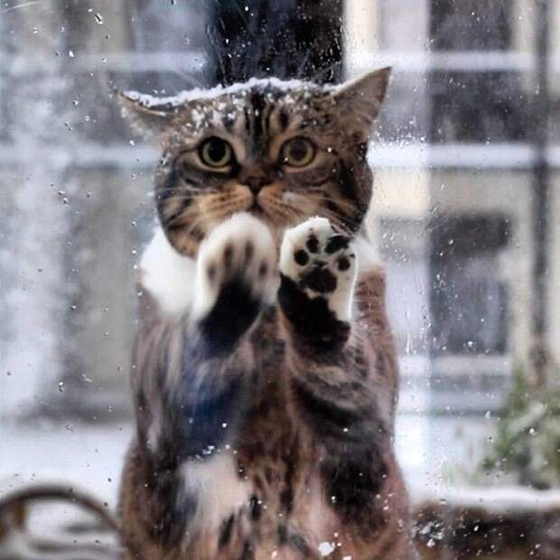 Кошка пришла к людям просить о помощи