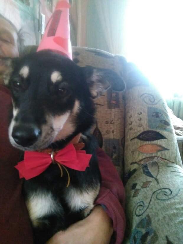 праздник у собаки
