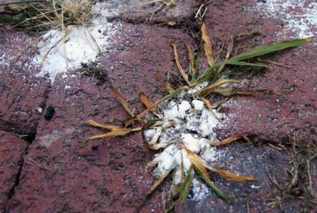 Уничтожить сорняки на грядках.   Фото: fiest.ru.