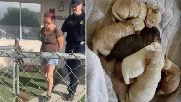 Калифорнийские власти арестовали собачницу, которая выкинула щенков в мусор