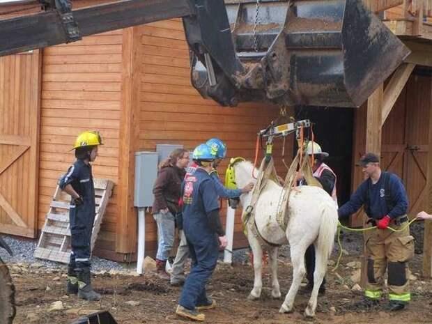 Любопытная лошадь прокралась на чердак за сеном, но вскоре пожалела об этом животные, забавно, история, лошади, лошадь, спасение животных, ферма, фото