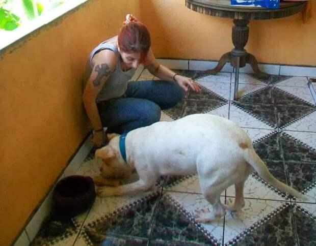 Чудесное спасение собаки - я в шоке!