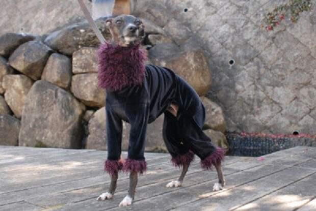 Ни одна другая собака не справляется с зимними холодами так грациозно. животные, милота, собаки