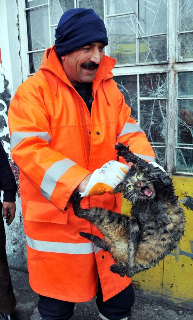This cat has just been pulled out of a car engine - he isn't happy