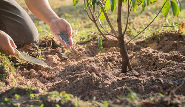 Чем подкормить сад осенью