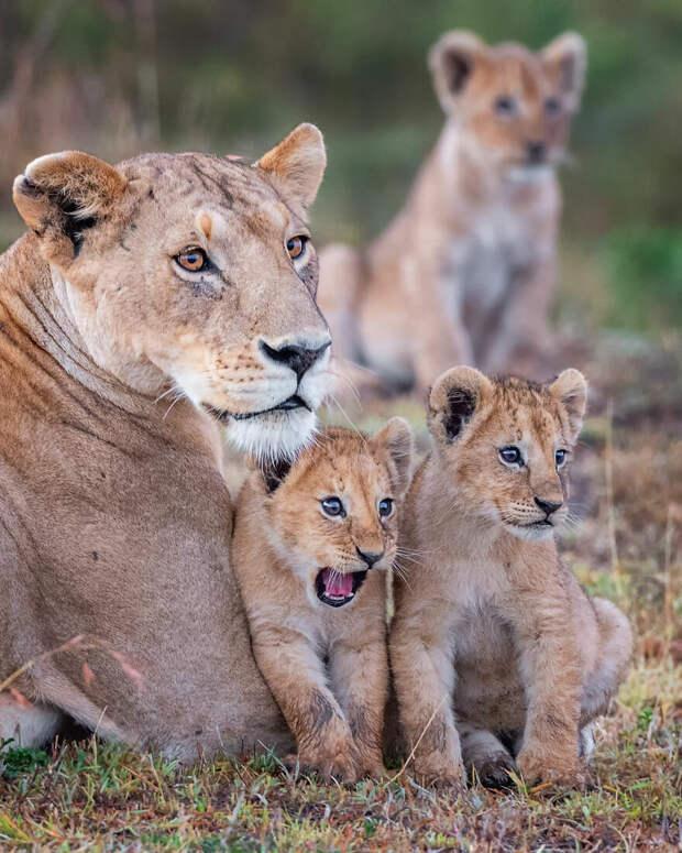 Ярон Шмид / Comedy Wildlife Photo Awards 2020