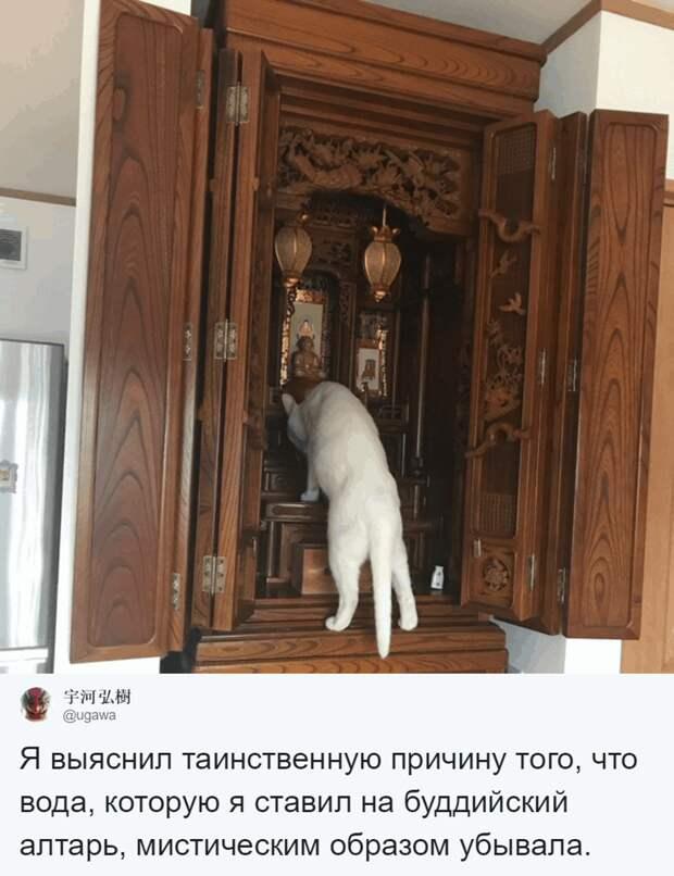 Японец сфотографировал своего кота за «преступлением» домашний питомец, животные, коты, лапки, художник, япония