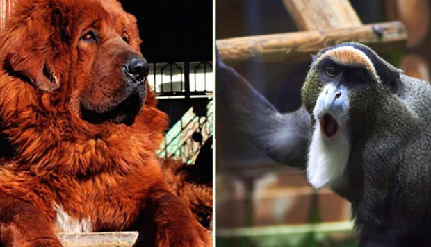 Животные, которые стоят баснословных денег