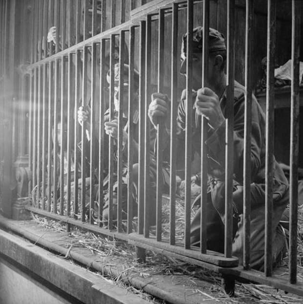 Немецкие военнопленные в клетке.  Антверпен 1944 год.