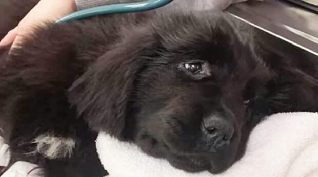 Больная собака даже не вставала. Её хотели усыпить, но добрые люди решили бороться за жизнь бедняжки