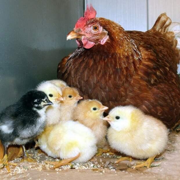 Самые удивительные мамы в животном мире