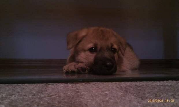 Старенькая собачка родила щенков. Выжил только один, а добрый мужчина забрал его домой, чтобы спасти