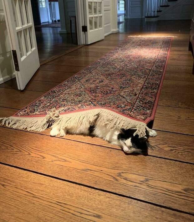 Что не так с вашим котом? 14 усатых, которых ведут себя странно