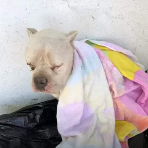 Собака на мусорнике